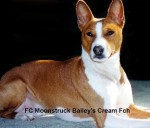 FC Moonstruck Bailey´s Cream Fch