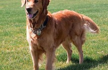 Diabetic Alert Dogs Save Lives