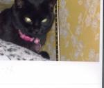 Kitty Foust