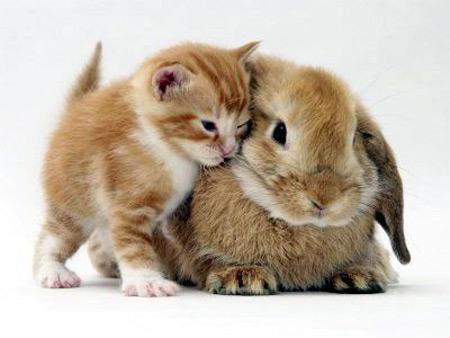 cat-rabbit