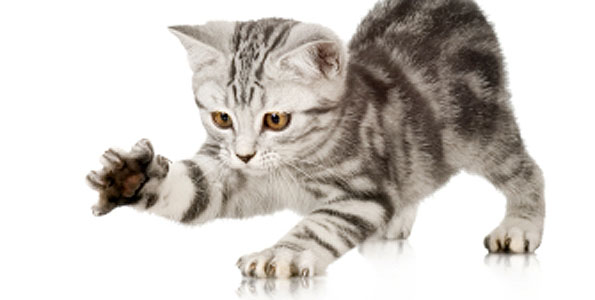 3 Common Kitten Behavior Problems And How To Curb Them