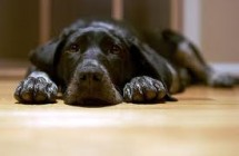 Know the signs of urinary tract and bladder infection for your dog…