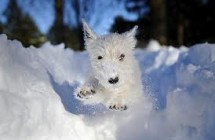 How to Keep Outdoor Pets Warm in Winter
