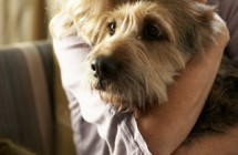 9 Things Never to Say to Someone Who's Lost a Pet…